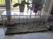 Käfig Nagetierkäfig Glas Nagarium Hamster