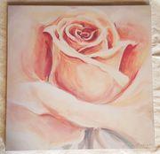 3 verschiedene Bilder Rosen