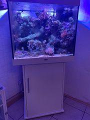 Aquarium Würfel Juwel lido 200