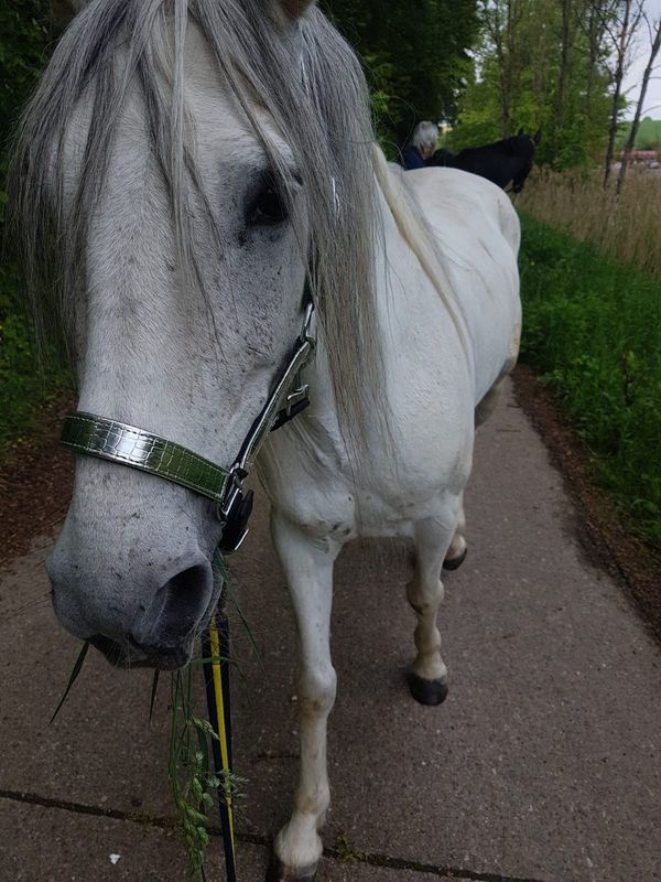 Verkaufe 2 Pferde pro Pferd