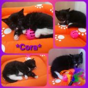 Kitten Baby Katze Cora geimpft