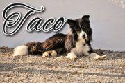 Bieten Sie Taco die nötige