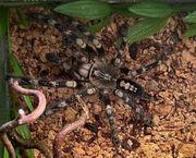 biete Notaufnahme für Spinnen usw
