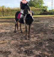 Freizeit-Reiterin sucht Pferd Reitbeteiligung