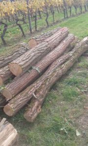 Holzstämme Robinie naturgewachsen
