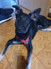 Hundekind Moritz sucht ein Zuhause