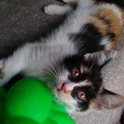Freundliches Kätzchen Onni sitzt auf