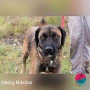 Georg Nikolas- friedlicher Zeitgenosse sucht