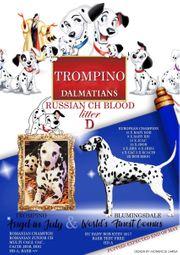 FCI-Dalmatinerwelpen aus Championverpaarung