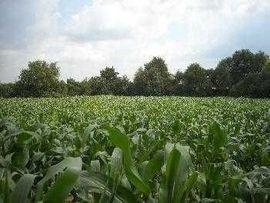 Bauernhäuser, Höfe, Güter - Ungarn für Selbstversorger 2 Hektar