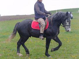 Bild 4 - Ständig Fahr-u Freizeitpferde - Buttstädt