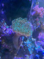 Meerwasser Auflösung Korallen