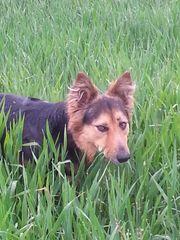 Hundebetreuung für Sam