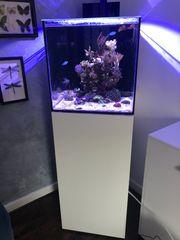 Meerwasser Aquarium Aqua Medic Cubicus