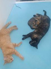 Hauskatze Wildkatzen Mix Baby weiblich