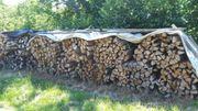 Brennholz 1Ster max 25cm lang