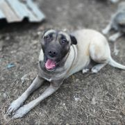 Ophelia - Hundemama sucht Familienanschluss