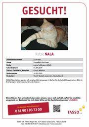 Katze Nala vermisst in Ottersdorf
