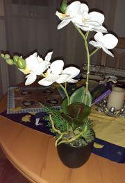 Orchidee im Porzellan Topf mit