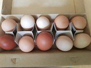 frische eier Hühnereier Bauerneier Eier