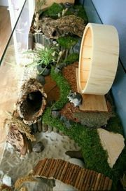 Hamster Gehege Nagerarium Terrarium Aquarium