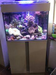 Meerwasser Korallen Fische kompletter Inhalt