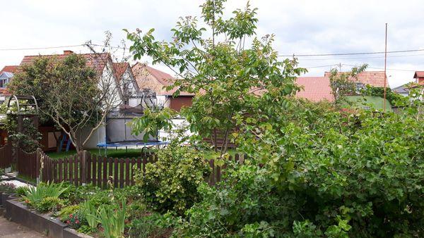 Haus mit Garten und Schuppen