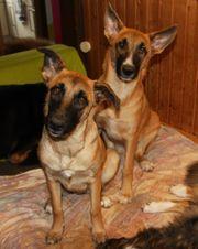 Gracie und Samy suchen Spielpartner