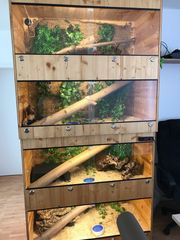 Terrarium hochwertiges Holz
