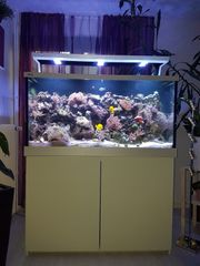 Meerwasseraquarium Red Sea MAX S