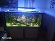 Meerwasseraquarium 700l komplett