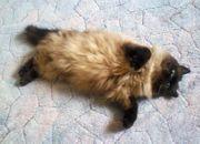 Gegenseitige dauerhafte Katzenbetreuung im Tausch