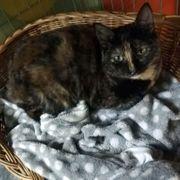 Hübsche Katzenlady Lola sucht ihre