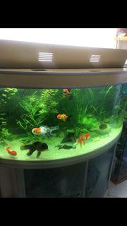 Aquarium 360 Liter komplett