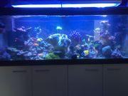 Meerwasser Aquarium komplett mit hochwertiger