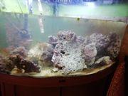 Meerwasser Lebendgestein abzugeben 1kg 5