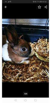 Hasen Käfige und ein Kaninchen