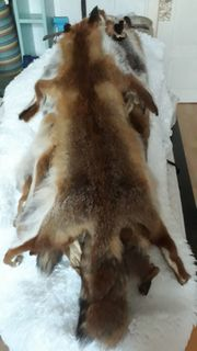 Fuchsfelle zu verkaufen