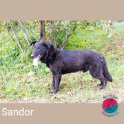 Sandor- einer der sportlichsten Hunde