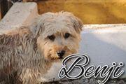 Strubbel Benji sucht sein Körbchen
