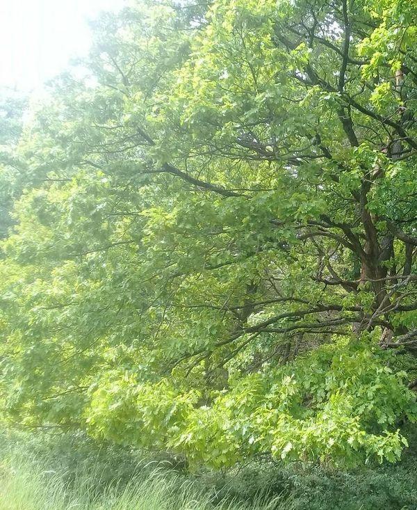 Wald Mischwald