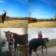 Reiterin sucht liebes Pferd