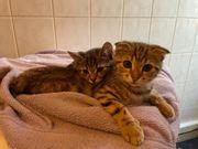 3 Baby Katzen