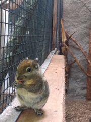 Baumstreifenhörnchen abzugeben