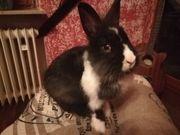 Zeei liebe Kaninchen Babys suchen