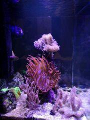 Meerwasseraquarium 60l Preisvorschlag