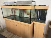 Meeresaquarium Salzwasseraquarium