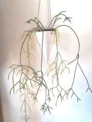 KERAMIKKEGEL - weiß - bepflanzt
