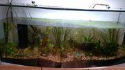 Aquarium 200l