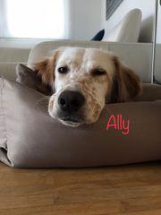 Ally sucht ein neues Zuhause